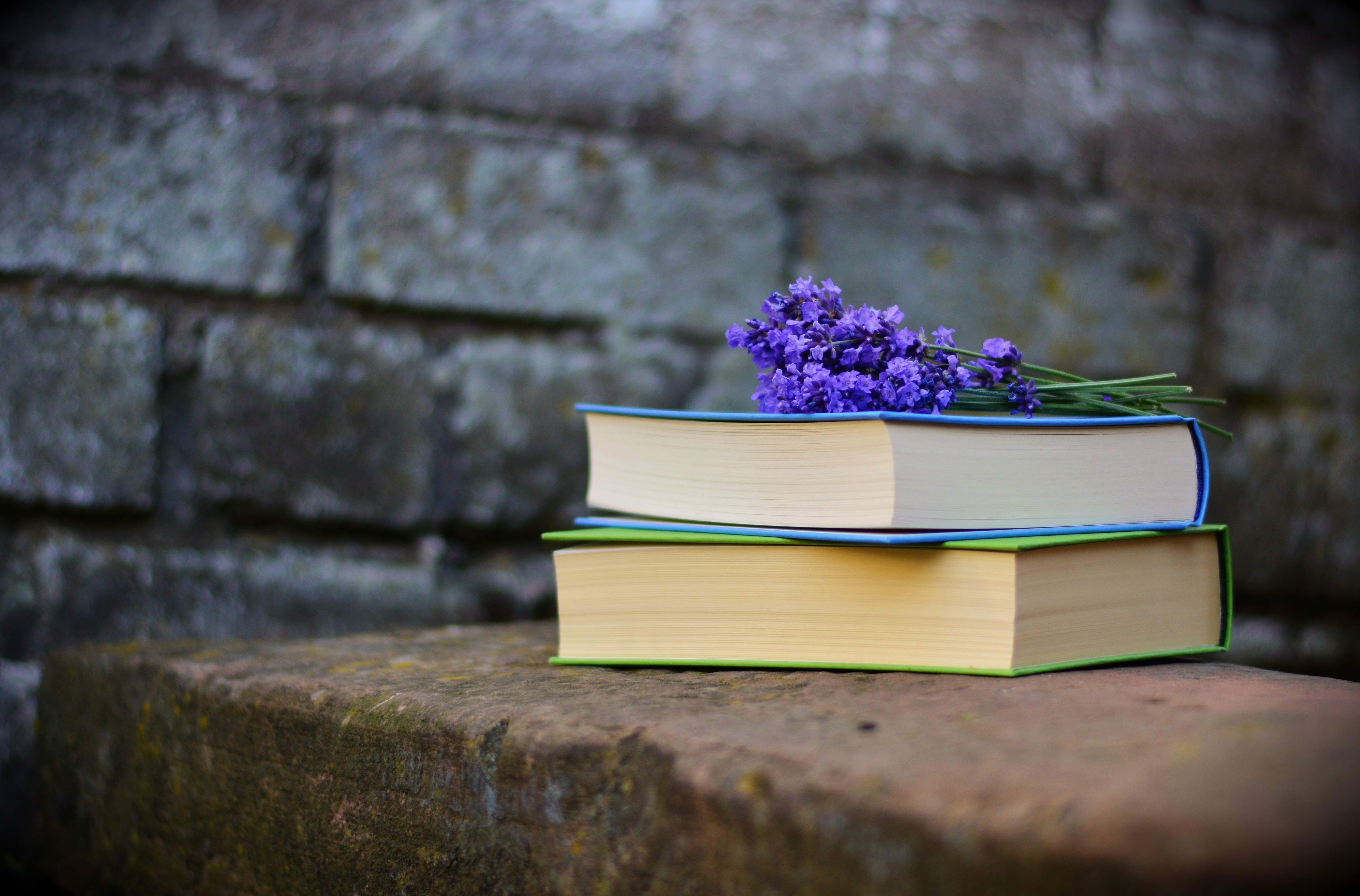 New book recommendations for June